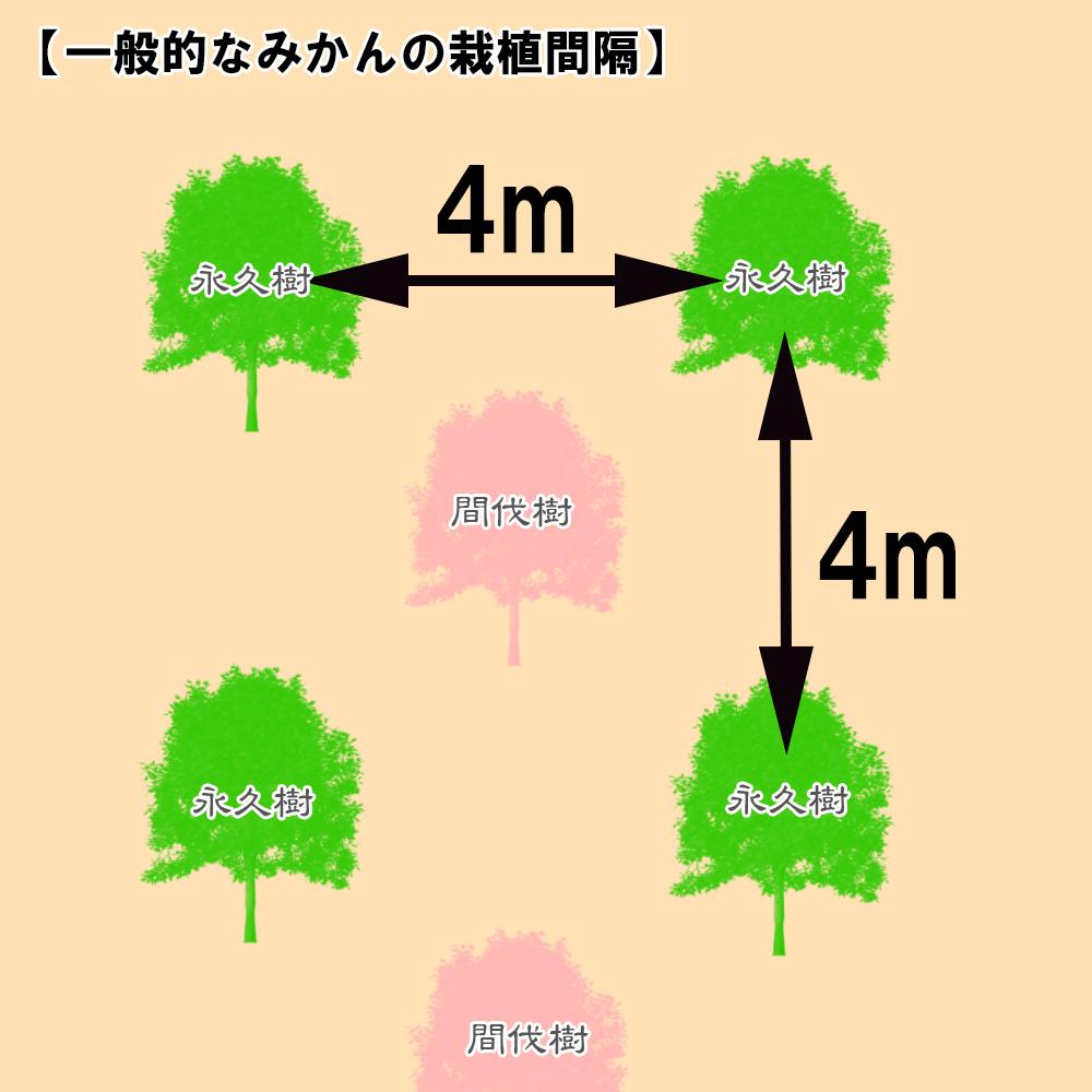 みかん一般的な栽植間隔