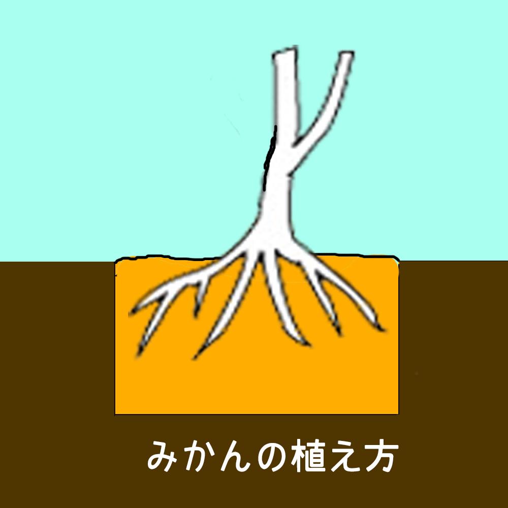 みかんの植え方