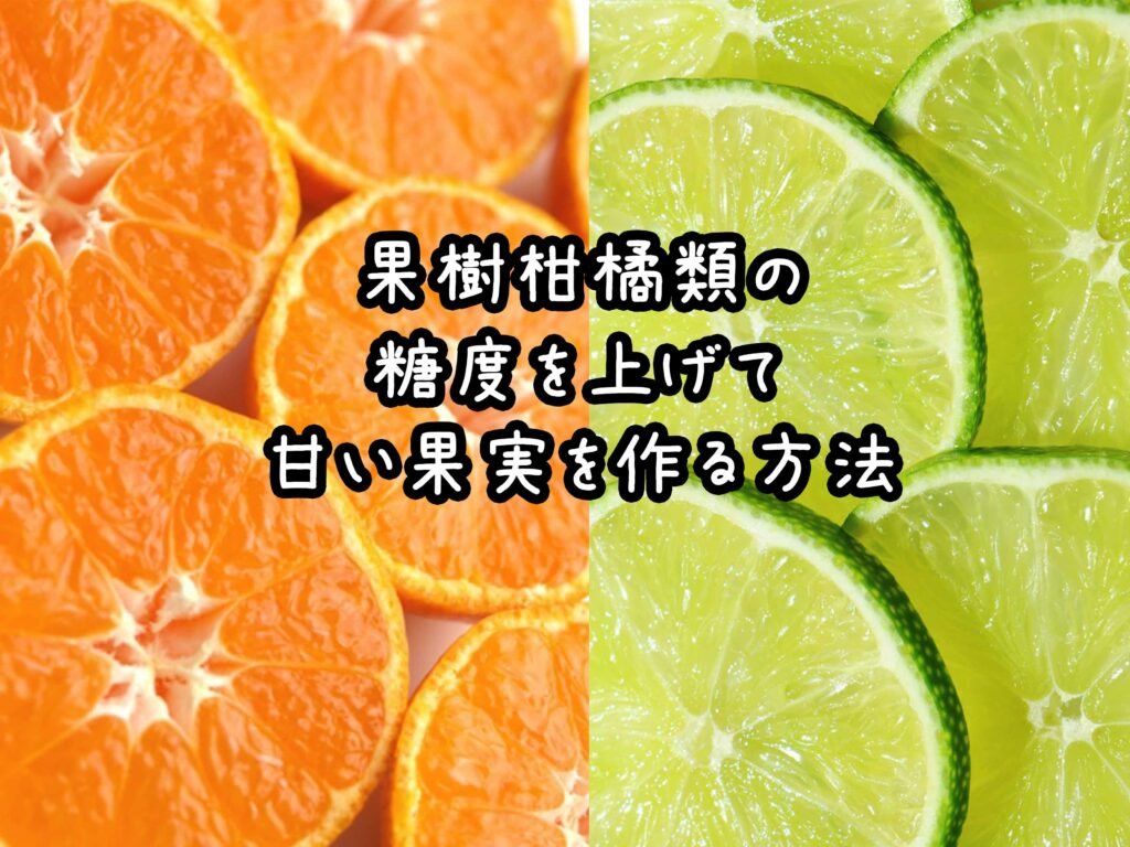 みかん等の果樹柑橘類の糖度を上げて甘い果実を作る方法